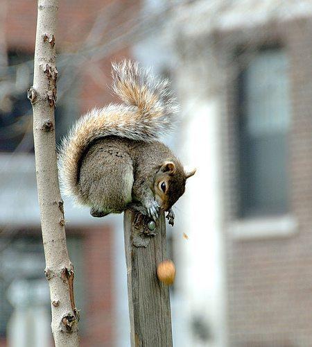Squirrel at Washington Square Park -  Oops!