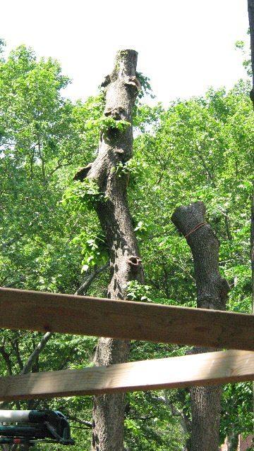 Washington Sq Park trees chopped down 05-21-08
