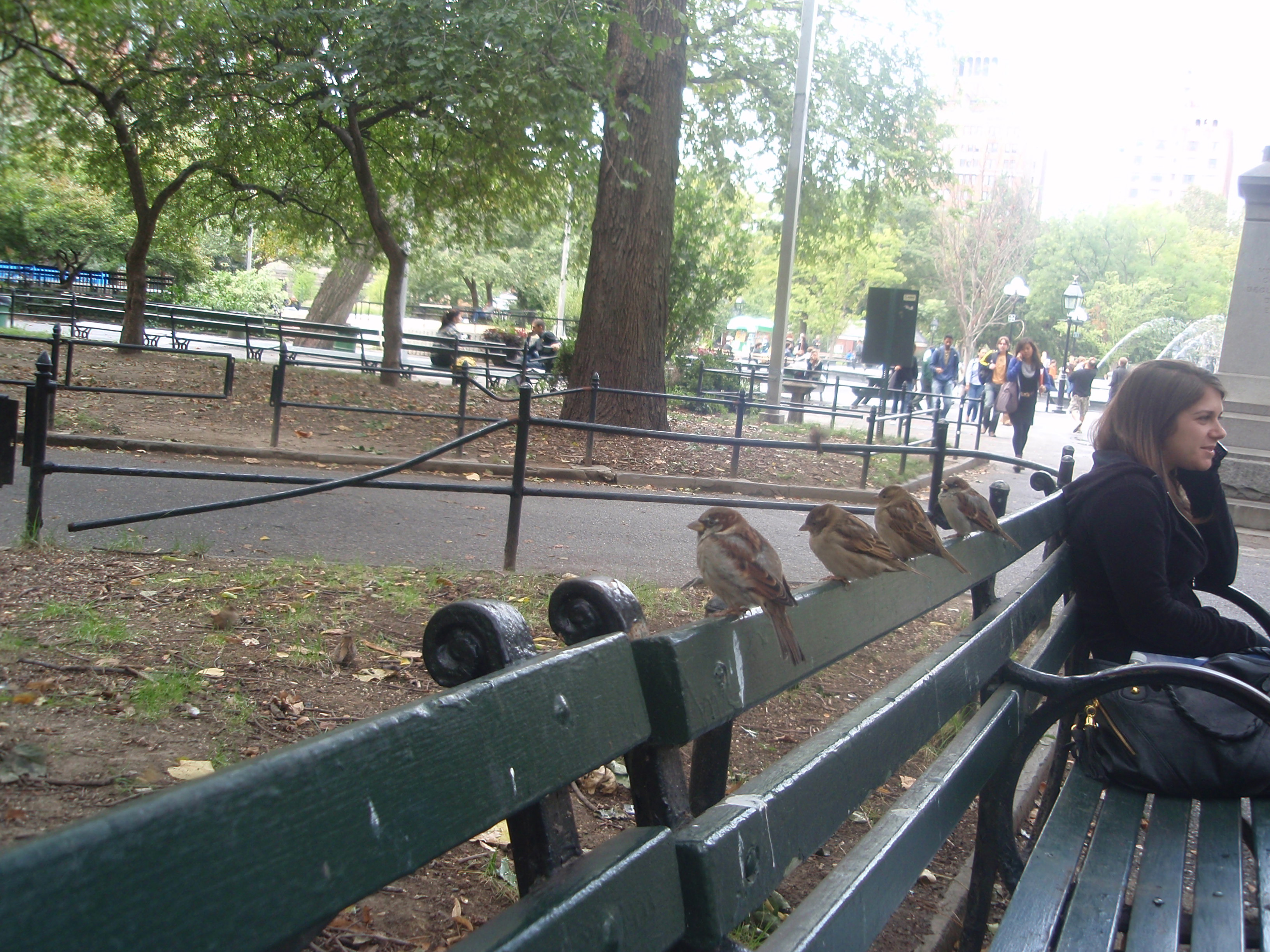 Sparrows on Old Benches