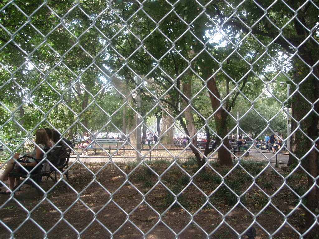 View Through the Fence