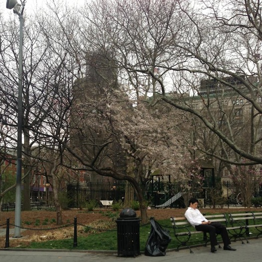 AfterMath of Fire Caused by Torched, Discarded Christmas Trees at Washington Square: Living Trees Now Struggling to Survive